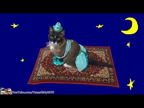 Cat Riding Magic Flying Carpet. #HappyHalloween I TexasGirly1979