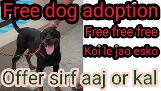 Free free free Rottweiler for free adoption female