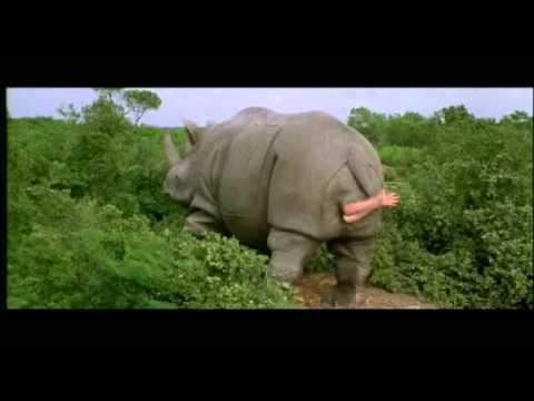 ace ventura en afrique rhinoc233ros jim carrey youtube
