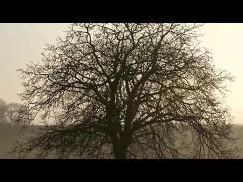 Телеман Георг Филипп - Sonata In Am - 3 Andante