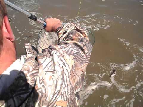видео ловля стерляди на оби