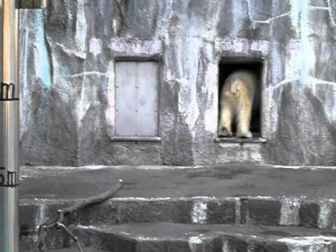 足突っ張っています。キロル。2011/3/13 浜松市動物園