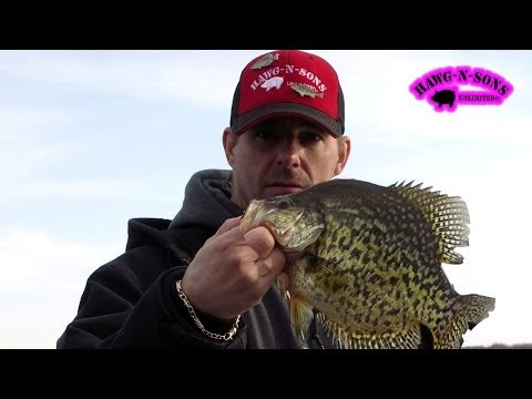 Fishing Crappie Lake Delavan Wisconsin ONLY on HawgNSonsTV! Video