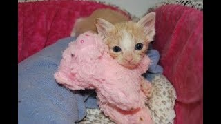 "Kitten Cuddle Room LIVE 24/7 Kitten Cam - The Adorable ""Under The Sea"" Foster Kittens"