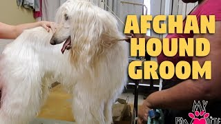 Afghan Hound Grooming EAR CLEAN & NAILTRIM
