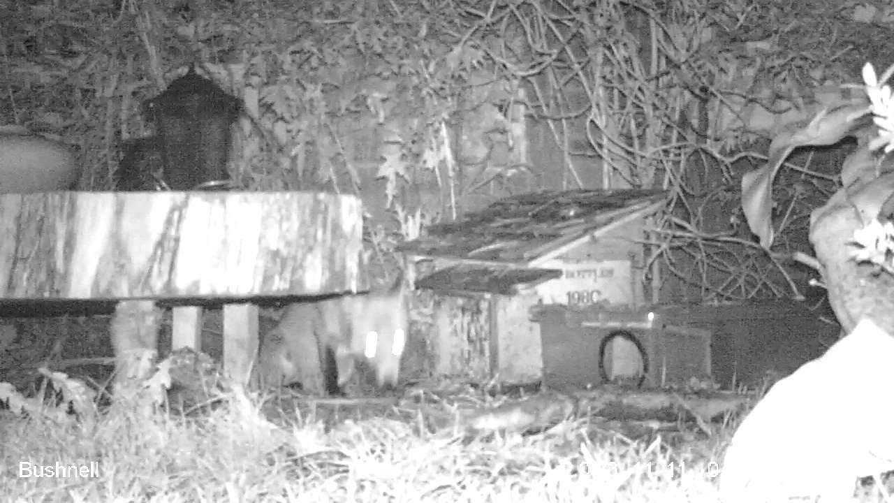 Found Dead Bird in Garden mr Fox Found a Dead Bird in