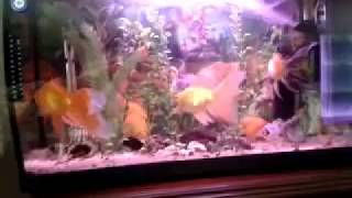 Goldfish Tank Filtration, diy wow, DIY WOW,