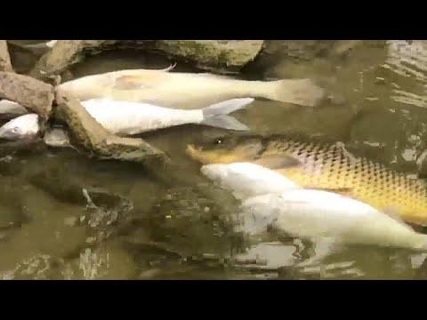 Австралия: лесные пожары и мор рыбы