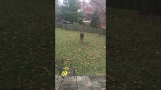 Monster Urban White Tail in Northern Kentucky (2 of 2)