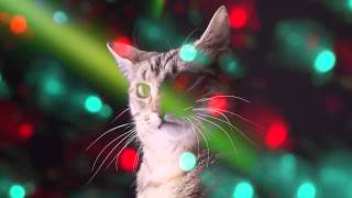 CATS RAVE