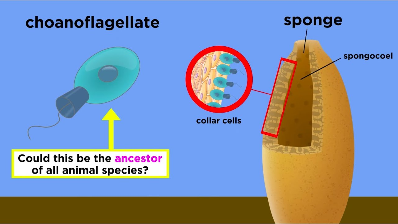 1 explain how cells specialize to Be able to explain the cell theory have an understanding of what specialization is and how cells are specialize in their different functions.