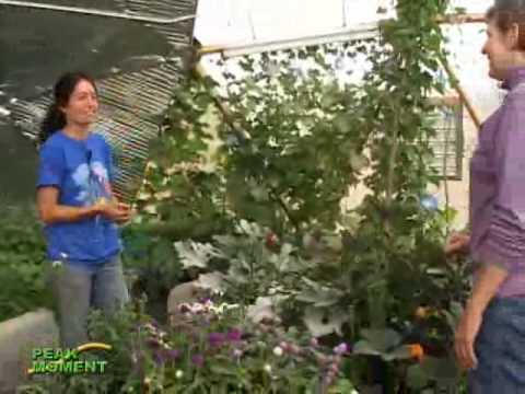 Round Greenhouse Greenhouse — Year-round