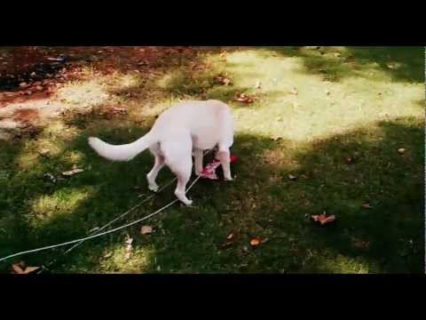 apbr dog cable run tutorial how to save money and do it your