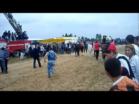 Büyük Mandıra Şenlikleri 27 Mayıs 2012 At Yarışları