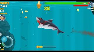 How to stay by a great white shark in hungry shark