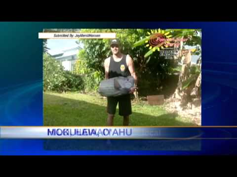 Spotlight Forecast: Mokuleia - Smashpipe News Video