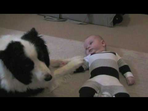baby and his dog kiss and play