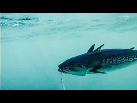 Ψαρεμα εργαλεια κατω απο τα ορια. αλλο ψαρεμα !!