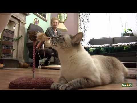 Êtes-vous pret a avoir un chat a la maison - Mon Chat - Tom&Co