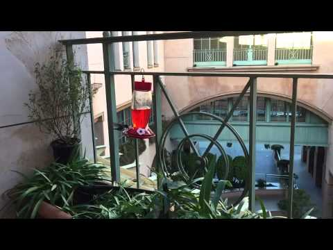 I love my hummingbirds, so cool in slo-mo!