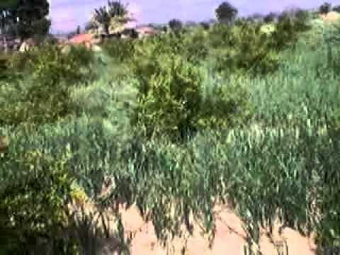 Sawargaon tal 1