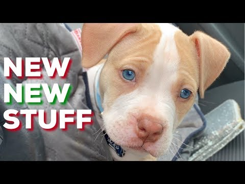 VLOGMAS | New PUPPY, new BAE, new HOUSE!?