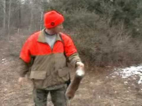 Rabbit Hunting with beagles Bradford Pa Video
