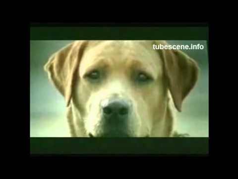 Best Funny Vids Animals Dong Fucking Funniest Car Commercial You´ll Ever See 2010 Hd.wmv video