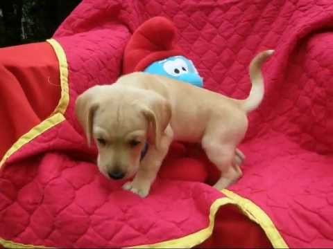 Pet rescue | Puppies for Sale | Animal Shelter in dc, ny, nj, va, ma, ri, nh