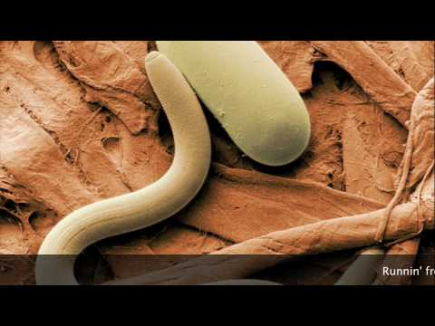 Sporulation - The Endospore Song