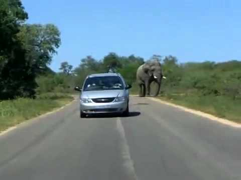 Elephant Charges Fail
