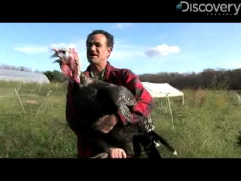 Top 5 Favorite Turkey Facts Video