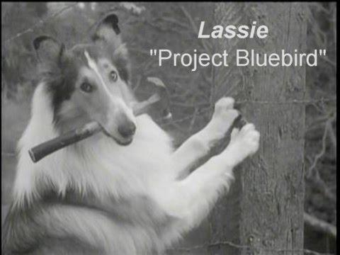 "Lassie - Episode #315 - ""Project Bluebird"" - Season 9, Ep. 24 - 03/24/1963"