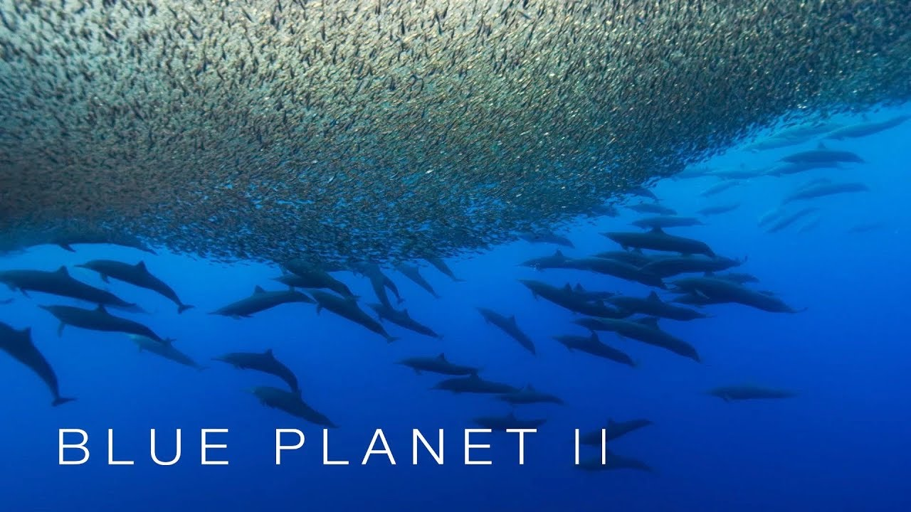 The sea boils with a furious feast - The Blue Planet II: Episode 4 preview - BBC One