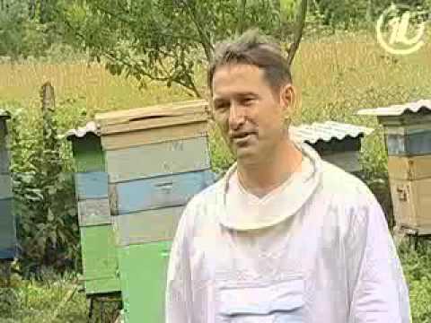 Мед - настоящий и липовый (Как делают мед)