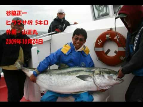 巨大ヒラマサ49.5kg Kingfish