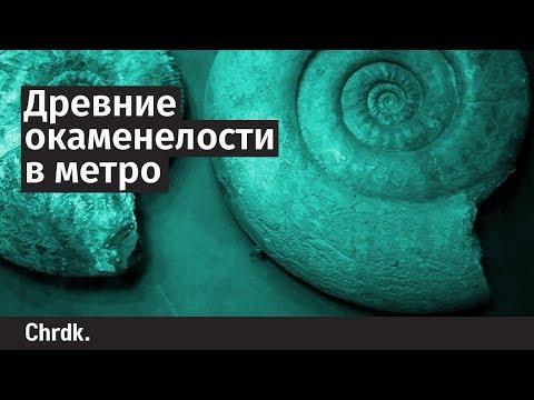 Древние окаменелости в метро