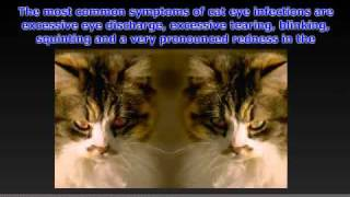 Cat Eye Infections