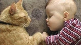 """Cats Love Babies Compilation - PART 2"" 