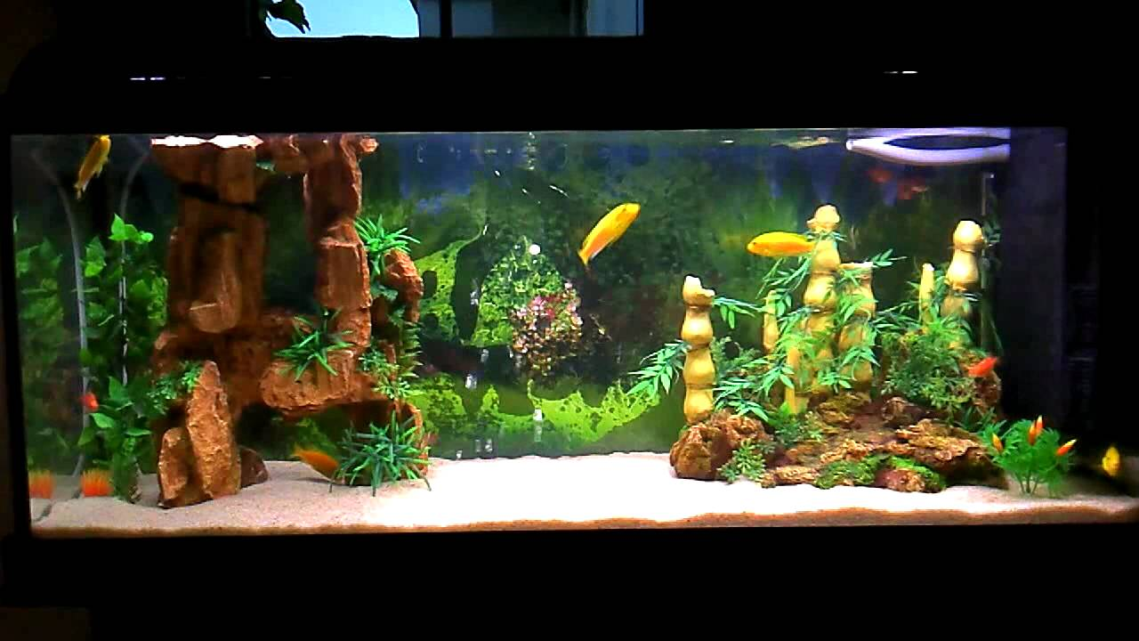 Beautiful fishes for home aquarium - photo#4
