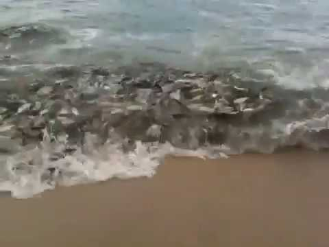Fish Feeding Frenzy - Los Barriles