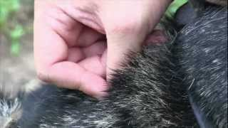 Protecting Your Pet From Ticks During An Unprecedented Year