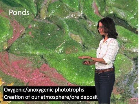 Ubiquity and Abundance of Microorganisms - Dianne Newman (Cal Tech/HHMI)