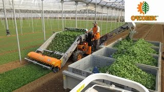 Harvesting of corn salad - Raccolta valeriana - ORTOMEC 8700 + TRAILER