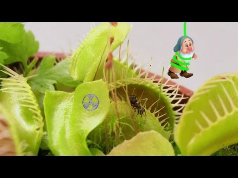 Horrorplant - Plant Vore video