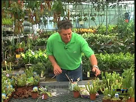 El jardinero en casa plantas carnivoras youtube for Jardinero en casa