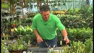 El Jardinero en Casa - Plantas Carnivoras