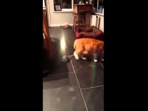kediye seri şekilde kafa atan kaplumbağa