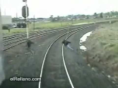 Atropello de tren