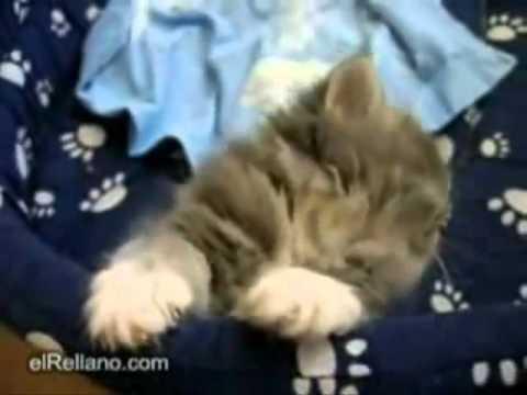 Кошачьи Приколы Приколы с Кошками